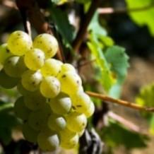 White Wine Blends