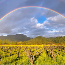 A Rainbow Of Organic Wines!